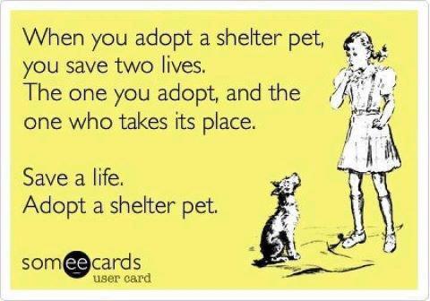 adopt-shelter-pet