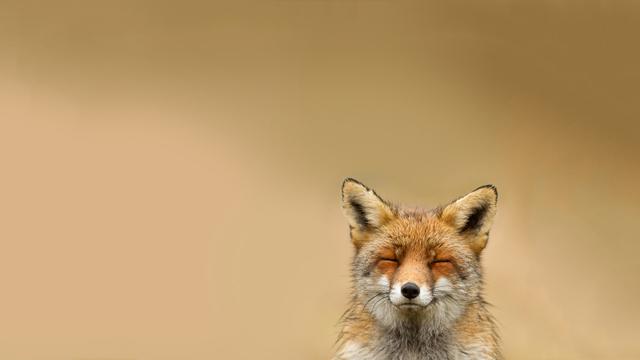 fox-smile